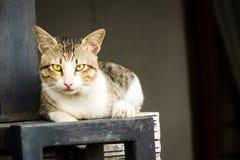Домашняя кошка лежа вниз Стоковые Фотографии RF