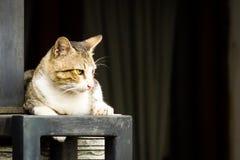 Домашняя кошка лежа вниз Стоковое Изображение