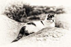 Домашняя кошка лежа и вытаращить между утесами Стоковое Изображение RF