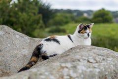 Домашняя кошка отдыхая на утесе Стоковое Фото
