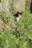 Домашняя кошка смотря камеру за деревом Стоковое Изображение RF