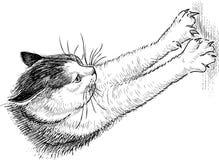 Домашняя кошка точит когти иллюстрация вектора