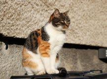 Домашняя кошка, catus silvestris кошки, сидя на пластиковом ящике наблюдая на саде Также она представляя меня Она очень playfull стоковые изображения rf