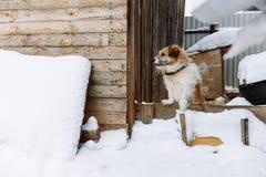Домашняя собака защищая дом стоковые фотографии rf