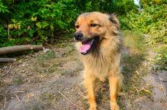 Домашняя собака Стоковые Фотографии RF