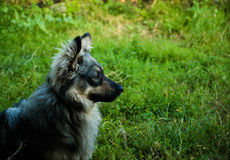 Домашняя собака Стоковые Фото