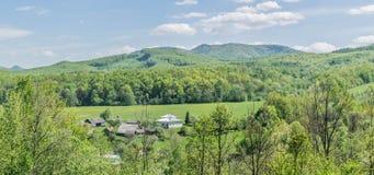 Дома в деревне в поле одуванчиков лесом Стоковое Изображение RF