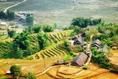 Дома в деревне и террасы риса среди зеленых деревьев в Вьетнаме Стоковое фото RF