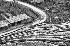 Дома и поля риса Стоковое Изображение