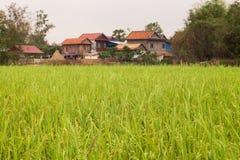 Дома кхмера деревянные полем риса в Камбодже Азии Стоковая Фотография RF