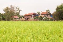 Дома кхмера деревянные полем риса в Камбодже Азии Стоковые Изображения