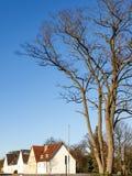 дерево и дома стоковое изображение