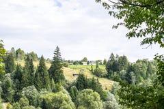 Дома на холме около леса Стоковое фото RF