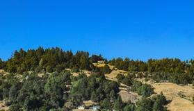 Дома построенные в холмах к северу от Сан Franscisco окруженных blufs и деревьями вечнозелёного растения под очень голубым небом стоковое фото rf