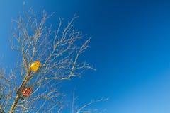Дома птицы в кроне старого дерева Стоковое Изображение RF