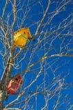 Дома птицы в старом дереве с голубым небом Стоковая Фотография RF