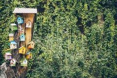 Дома птицы на дереве Стоковые Изображения RF