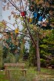 Дома птицы на деревьях Стоковое Изображение