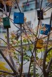 Дома птицы на деревьях Стоковое фото RF