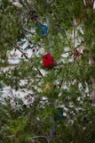 Дома птицы на деревьях Стоковая Фотография RF