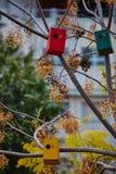 Дома птицы на деревьях Стоковые Изображения