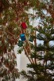 Дома птицы на деревьях Стоковые Фото