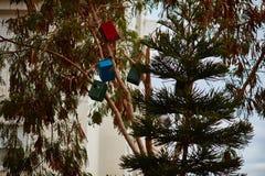 Дома птицы на деревьях Стоковое Фото