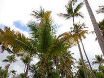 Доминиканская Республика Punta Cana гостиницы ладоней тропическая стоковые изображения rf