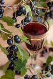 Домодельная настойка сделанная от черных смородин и свежих ягод стоковая фотография rf