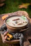 Домодельный суп гриба с грибами и петрушкой Стоковые Фото