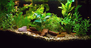 дом аквариума Стоковая Фотография RF