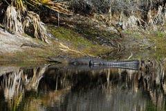 Дом болота Okefenokee к аллигаторам стоковое изображение