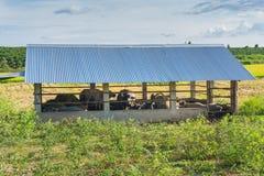 Дом буйвола Стоковые Фото