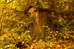 Дом вала кедра Стоковые Фото
