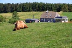 дом верблюда Стоковая Фотография RF