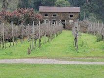 Дом виноградника Стоковые Фотографии RF