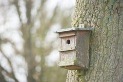 Дом вложенности для птиц вися на дереве Стоковое Изображение
