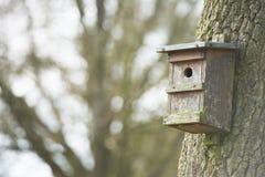 Дом вложенности для птиц вися на дереве Стоковые Изображения