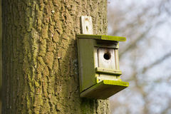 Дом вложенности для птиц вися на дереве Стоковые Фото