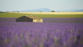 Дом в поле лаванды стоковое изображение rf