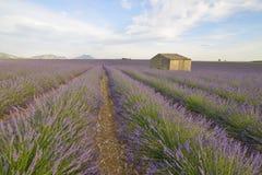 Дом в поле лаванды стоковые фото
