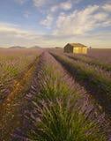 Дом в поле лаванды стоковые изображения