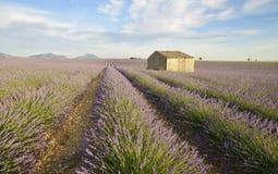 Дом в поле лаванды стоковые фотографии rf
