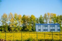 Дом в поле риса Стоковые Фото