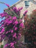 Дом в цветках Стоковое Изображение RF