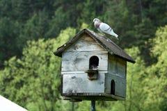 Дом голубя стоковое изображение rf