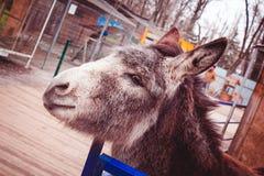 Дом грызуна скотного двора зверя Стоковая Фотография RF