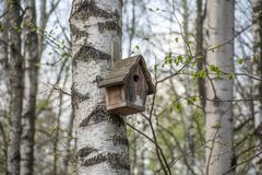 Дом для птиц вися на дереве березы стоковое фото rf