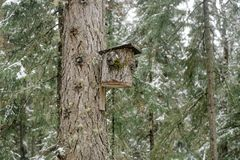 Дом для птиц сделанных от коры дерева стоковое изображение rf