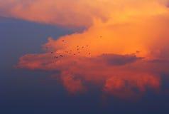 Дом летания Стоковое Изображение RF